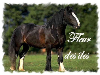 image cheval qui bouge